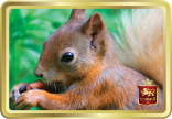 Baby Red Squirrel tin image