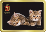 Cute Kittens tin image