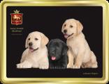 Labrador Puppies tin image