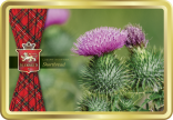 Flower of Scotland tin image