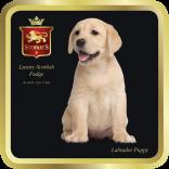 Labrador tin image
