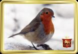 Robin In Snow tin image
