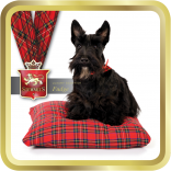 Scottie on Tartan Cushion tin image