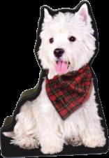 Scottish Westie tin image